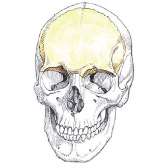 Симптомы и лечение перелома лобной кости