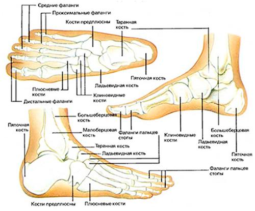 Трещина таранной кости симптомы