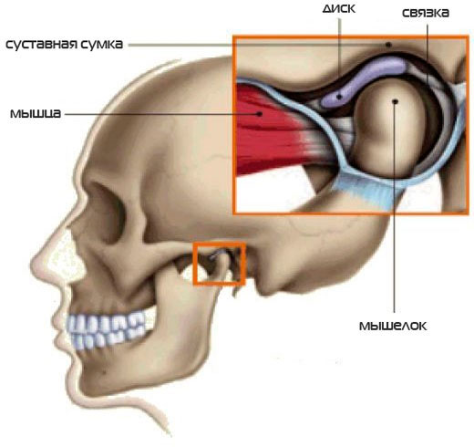 Подвывих челюсти: лечение, симптомы и первая помощь