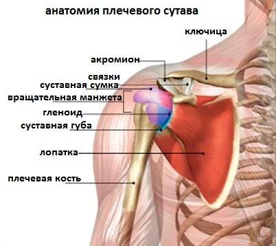 Изображение - Смещение плечевого сустава последствия podvyvikh-plechevogo-sustava-foto